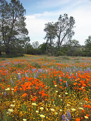 Wildflowers Photograph - Wildflower Wonderland 2 by Lynn Bauer