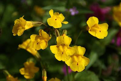 Photograph - Wildflower Yellow 2 by Robert Lozen