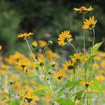 Photograph - Wildflowers 2013 by Fred  Sheridan