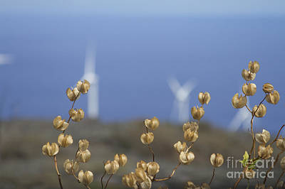 Photograph - Wildflowers And Auwahi Wind Towers Kahikinui Maui Hawaii by Sharon Mau