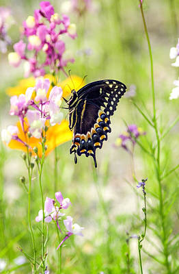 Wildflowers And Butterfly Art Print by Bill LITTELL