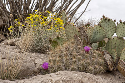 Photograph - Wildflowers And Cacti by Melany Sarafis