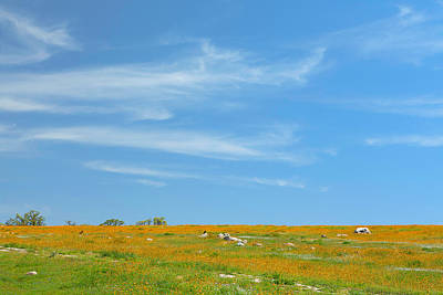 Photograph - Wildflowers And Cirrus Clouds - Spring In Central California by Ram Vasudev