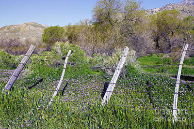Photograph - Wildflowers And Fence Post - Kern County Central California by Ram Vasudev
