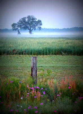 Photograph - Wildflowers And Fog by Sheri McLeroy