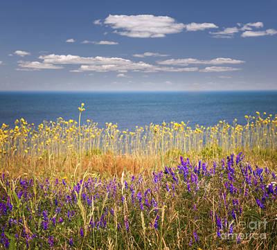 Animals Photos - Wildflowers and ocean by Elena Elisseeva