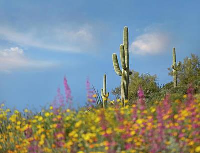 Wildflowers And Saguaros At Gonzales Art Print
