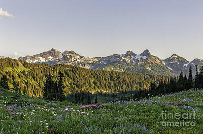 Wildflowers And The Tatoosh Range Art Print