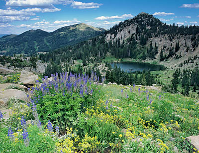 Wildflowers And View Of Lake Catherine Art Print by Howie Garber