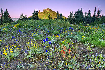 Photograph - Wildflowers At Dawn by Stuart Gordon