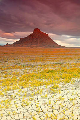 Wildflowers At Factory Butte. Art Print by Johnny Adolphson
