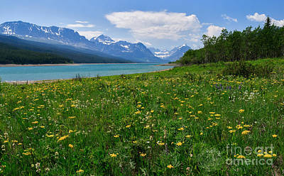 Photograph - Wildflowers At Lake Sherburne by Charles Kozierok