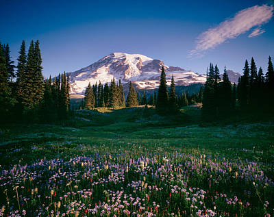 Wildflowers At Mt Rainier, Mt Rainier Print by Panoramic Images
