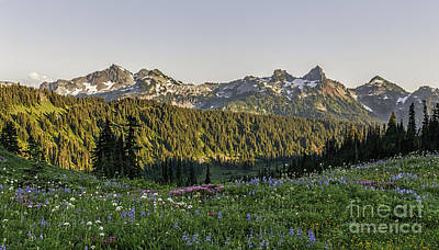 Photograph - Wildflowers At Mt Rainier by Sharon Seaward