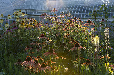 Wildflowers At Phipps Art Print by Mark Milar