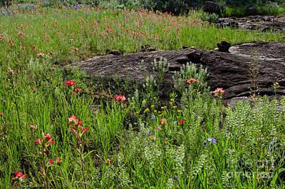 Wildflowers At Reveille Peak Ranch Art Print by Cathy Alba
