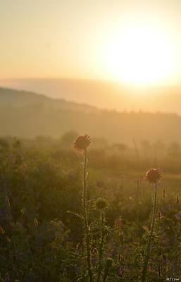 Photograph - Wildflowers At Sunrise by Maria Urso
