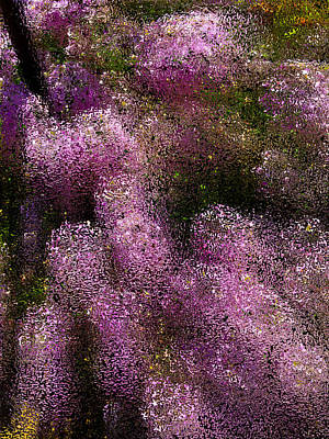 Photograph - Wildflowers by Bill Owen