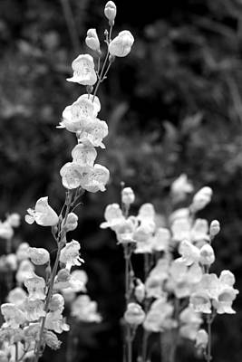 Wildflowers/bw1 Art Print by Diana Shay Diehl
