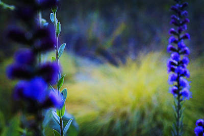 Greenfield Photograph - Wildflowers by Celestial Images