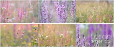 Photograph - Wildflowers Collage 13 by France Laliberte