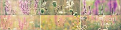 Photograph - Wildflowers Collage 8 by France Laliberte