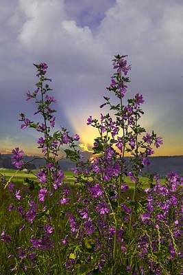 Pasture Rose Photograph - Wildflowers by Debra and Dave Vanderlaan