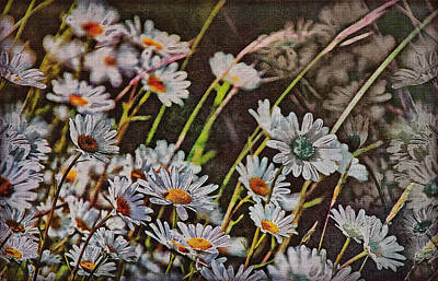 Photograph - Wildflowers by Hanny Heim