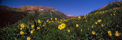 Wildflowers In A Forest, Kebler Pass Print by Panoramic Images