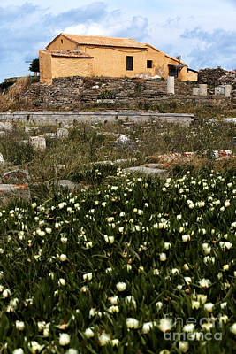 Photograph - Wildflowers In Delos by John Rizzuto