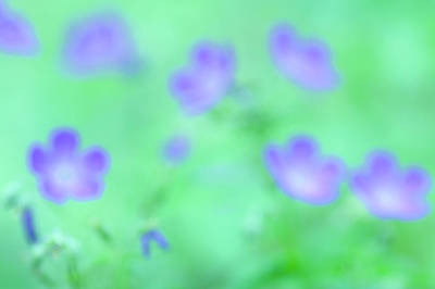 Abstract Flowers Images Photograph - Wildflowers In Great Smoky Mountains by Phil Schermeister
