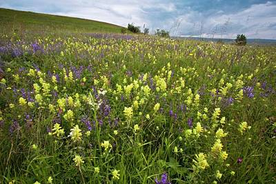 Rattle Photograph - Wildflowers In Hay Meadow by Bob Gibbons