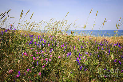 Photograph - Wildflowers In Summer Meadow by Elena Elisseeva