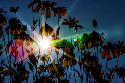 Wildflowers In Sunlight Art Print