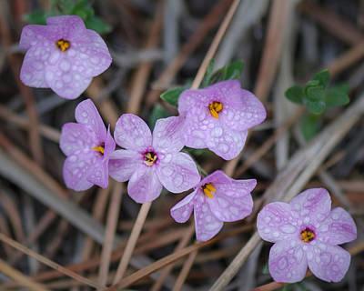 Photograph - Wildflowers In The Rain by Dakota Light Photography By Dakota