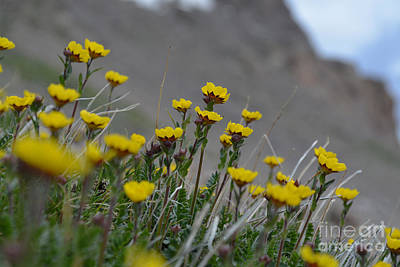 Photograph - Wildflowers by Kate Avery