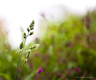 Photograph - Wildflowers by Kathy Ponce