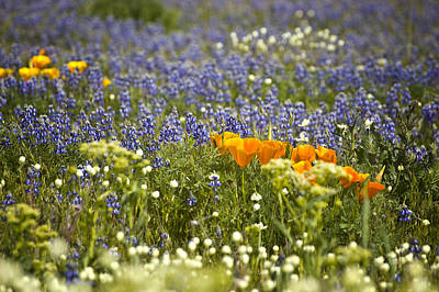 Photograph - Wildflowers by Mary Jane Utley