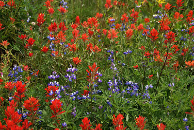 Photograph - Wildflowers Mixed 2 by Robert Lozen
