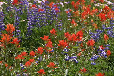 Photograph - Wildflowers Mixed 4 by Robert Lozen