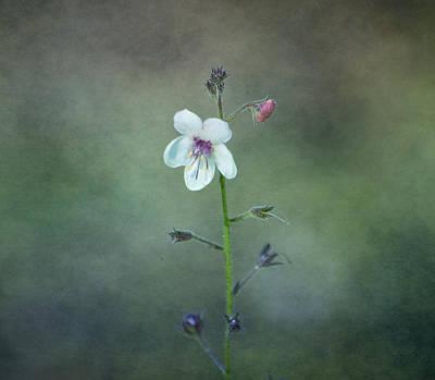 Photograph - Wildflowers - Moth Mullein by Deena Stoddard