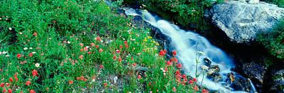 Wildflowers Near A Stream, Grand Teton Art Print by Panoramic Images