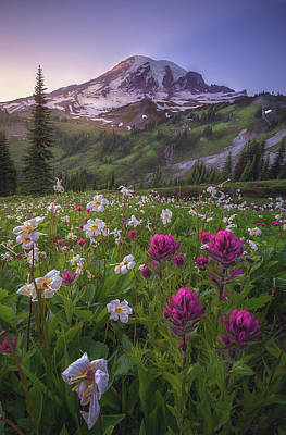 Mount Washington Photograph - Wildflowers Of Mt. Rainier by Steve Schwindt