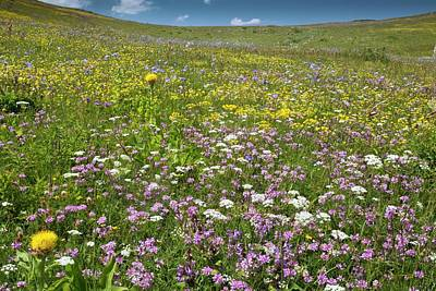 Wild Turkey Photograph - Wildflowers On A Mountainside by Bob Gibbons