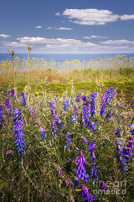 Photograph - Wildflowers On Ocean Coast by Elena Elisseeva