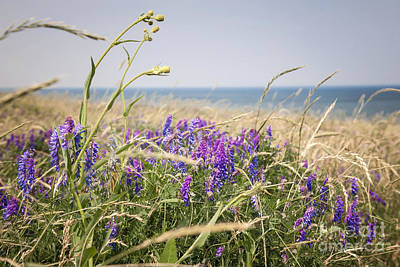 Vetch Photograph - Wildflowers On Prince Edward Island by Elena Elisseeva