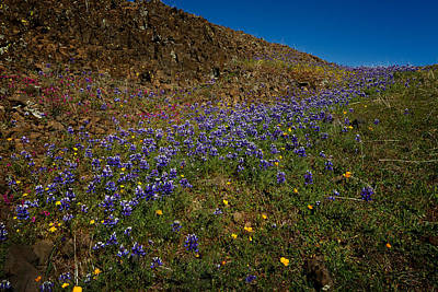 Photograph - Wildflowers On Table Mountain 2 by Robert Woodward