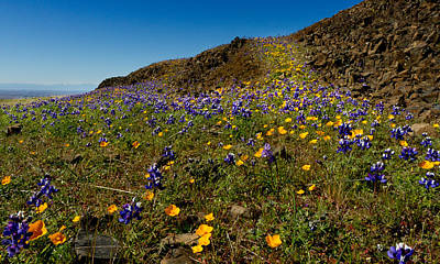 Photograph - Wildflowers On Table Mountain by Robert Woodward