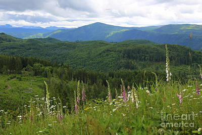 Photograph - Wildflowers Over The Mountains by Carol Groenen