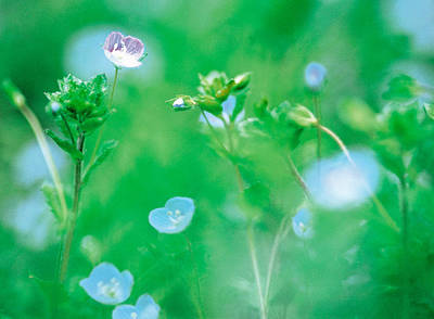 Blurred Background Photograph - Wildflowers by Panoramic Images